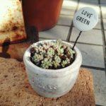 セリアのミニミニセメント鉢に多肉植物や観葉植物でミニサイズの鉢植え
