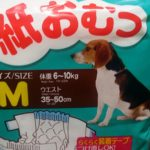 100均ダイソーに犬猫用の紙おむつが!4枚入りで100円ペット用品